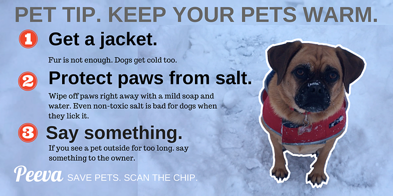 COLD WEATHER TIPSFOR PETS..png