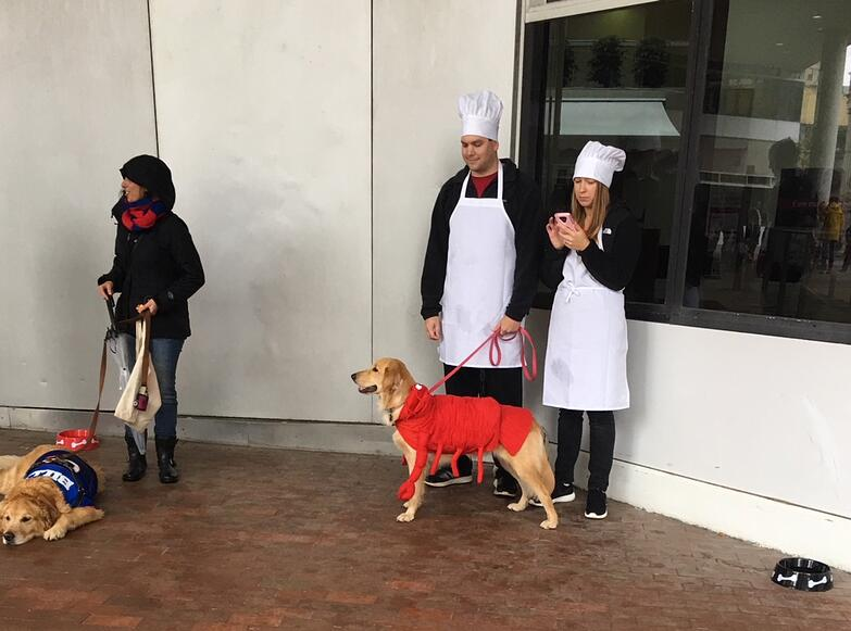 halloween puppy parade and costume contest