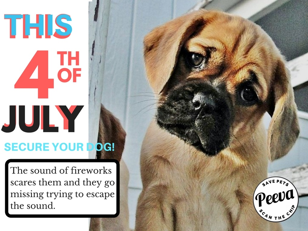 peeva 4th of july keep your pets safe