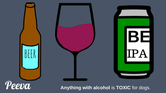 Peeva pet health tip Alcohol is bad for dogs.png