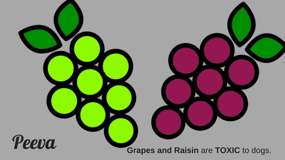 peeva dog health nutrition tip grapes and raisins are toxic for dogs.png