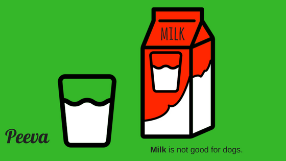 peeva puppy health tip milk is not good for dogs.png