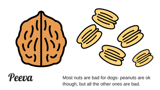 peeva puppy health walnuts, macadamia nuts are bad for dogs toxic.png