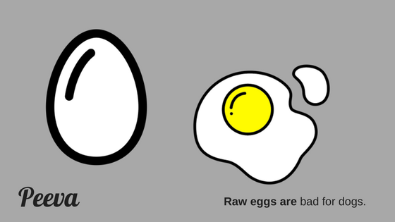 raw eggs are bad for dogs.png