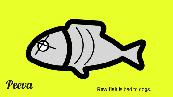 raw fish is bad for dogs.png