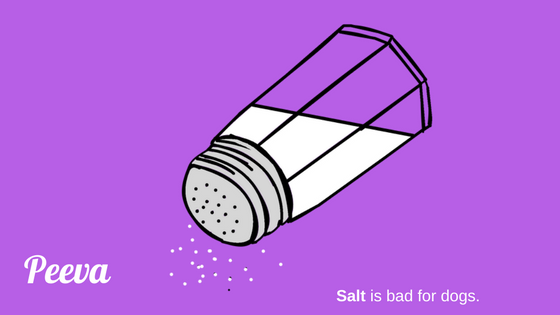 salt is bad for dogs .png